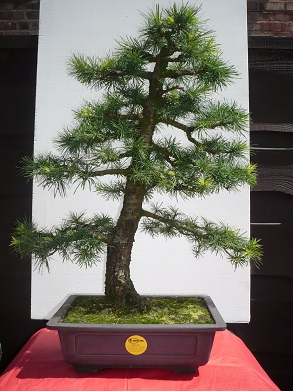 RFID Systems - Trovan Larch Bonsai Tagged