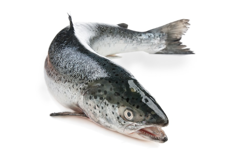RFID Systems - Trovan Salmon for animal tracking